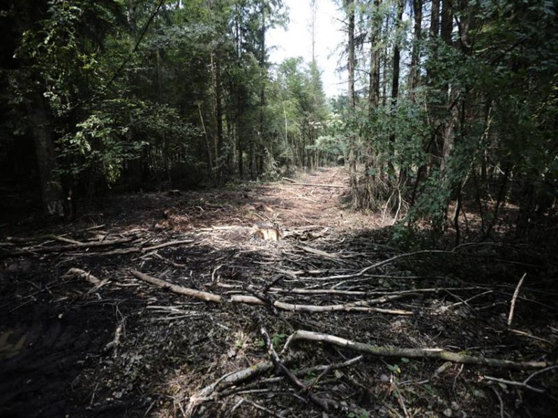 Another protest against commercial logging in the Bialowieza Forest