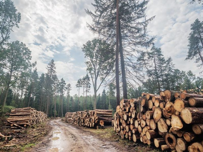 Szyszko won't give up logging. 11th blockade in the Forest.