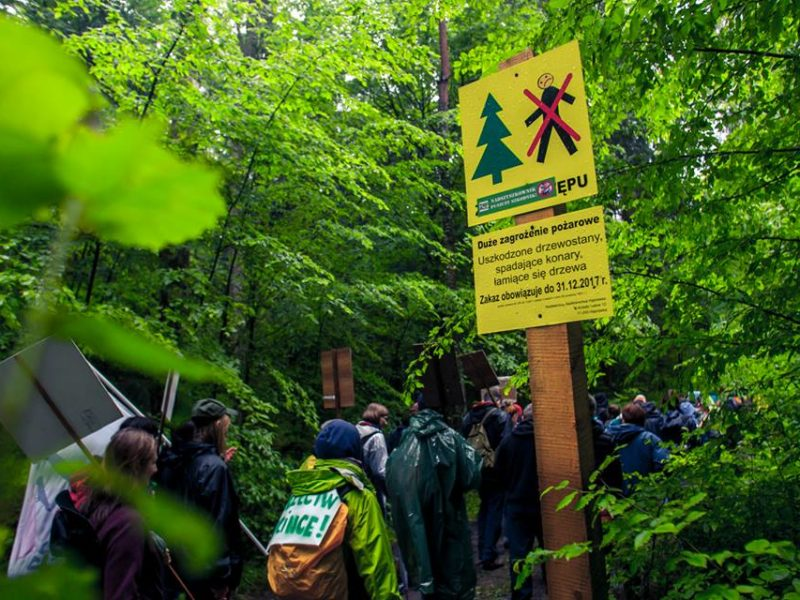 Part of Białowieża Forest District opened again