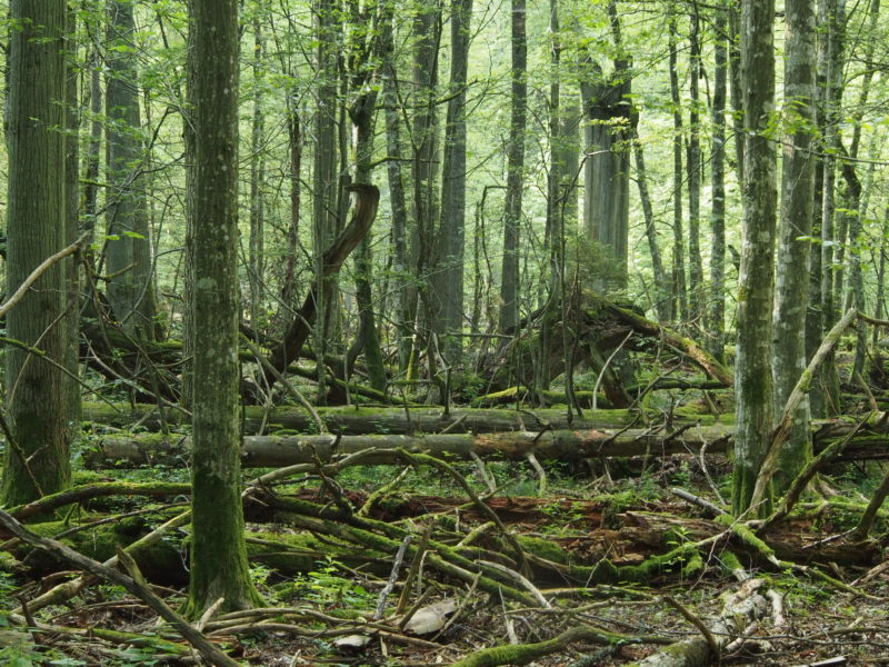 'Let nature decide' – rectors of most distinguished Polish universities against the logging