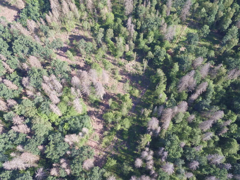Logging in old-growth forest despite the UNESCO decision