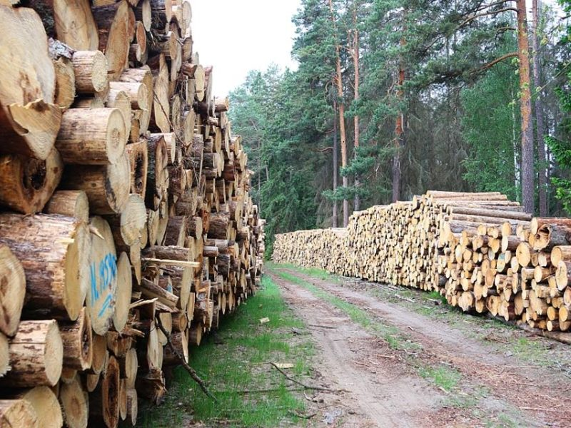European Commission takes Poland to European Court of Justice over logging in Bialowieza Forest