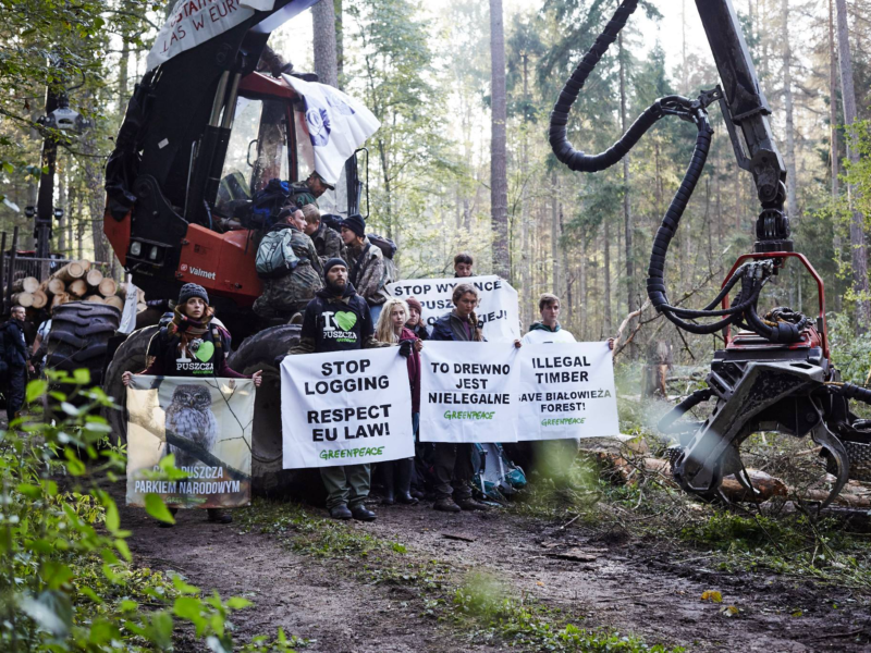 The biggest blockade in the Forest