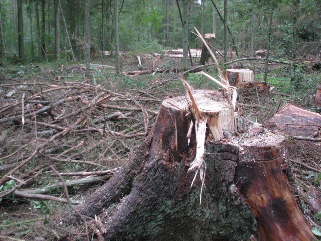 EC wants to punish Poland. Szyszko keeps logging anyway.