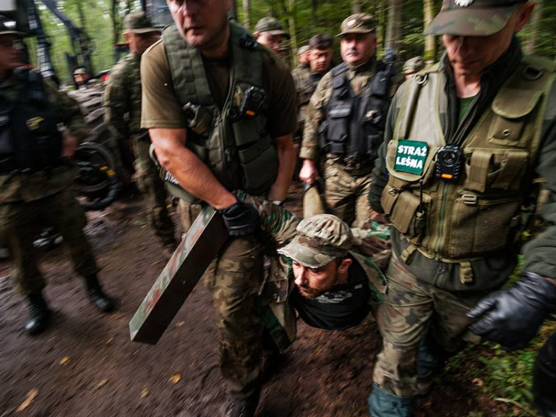 Logging and violence have to come to an end. More activists needed!