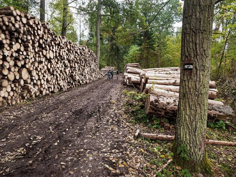 Illegal logging – all timber removal limits much exceeded long ago