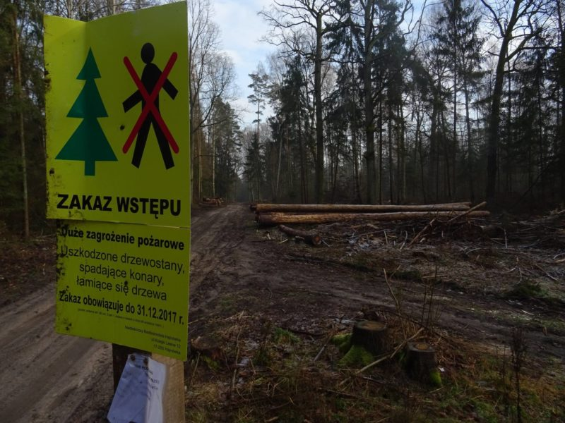 Hajnówka Forest District closed for public access